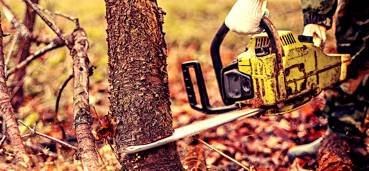 A Chainsaw cutting into a tree.