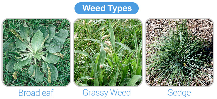 Best weeed killer for lawns. Weed types.