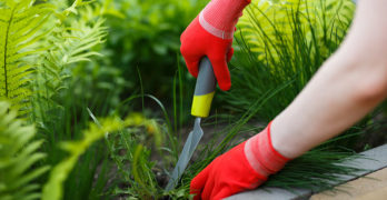 What Kills Weeds Permanently? Practical Advice & Tips